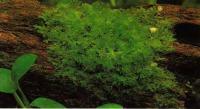 Сосновые корни, озелененные мхом, выглядят особенно привлекательно