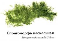 Спонгоморфа наскальная