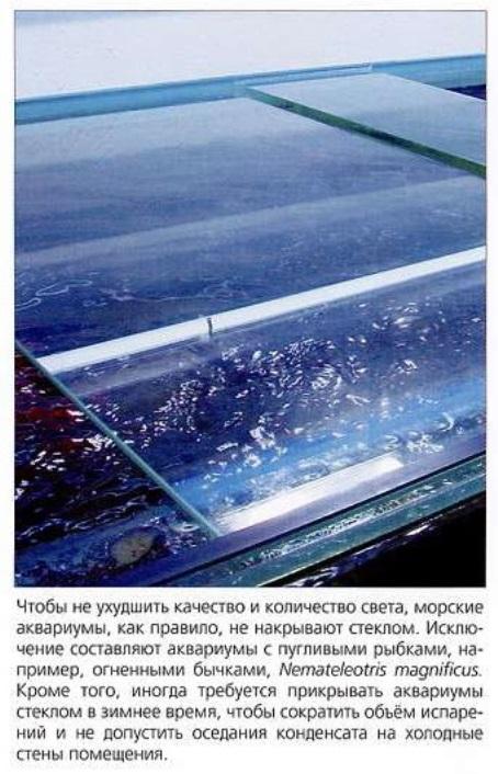 Стеклом накрывают аквариумы с пугливыми рыбками