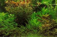Уход за аквариумными растениями не требует больших затрат