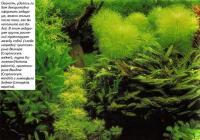 В этом аквариуме группы растений гармонируют между собой