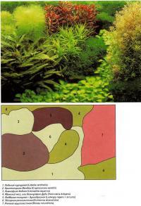 Вариант оформления аквариума №4