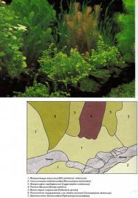 Вариант оформления аквариума №9