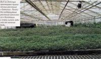 Вид на датскую оранжерею тропических растений «Тропика»