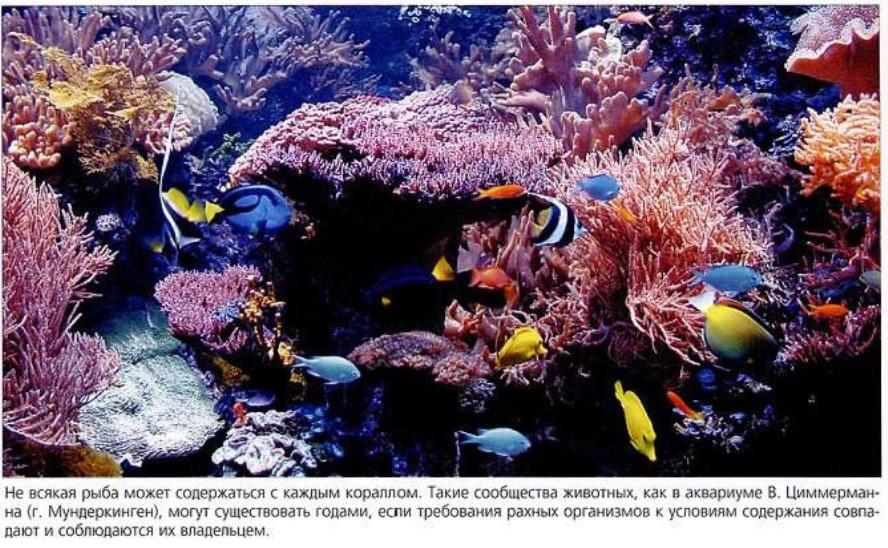 Вместе могут существовать только рыбы и кораллы, у которых совпадают условия содержания