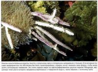 Во время роста кораллы тянутся к солнечному свету