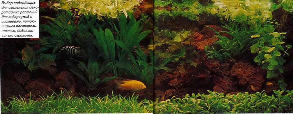 Выбор подходящих декоративных растений для аквариумов с циихлидами