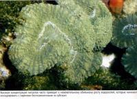 Высокая концентрация нитратов провоцирует рост водорослей