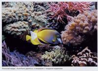 Японский хирург в аквариуме с кораллами