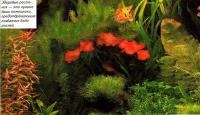 Здоровые растения — лучшие помощники против появления водорослей