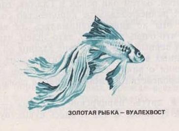 Золотая рыбка - вуалехвост